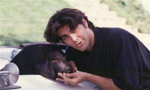 clooney pig