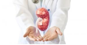 3D Human Organs