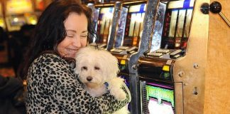 Pet Friendly Casinos