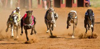 Florida Votes to End Greyhound Racing