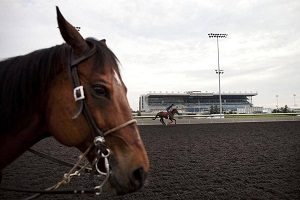 Horse Racing and Animal Rights