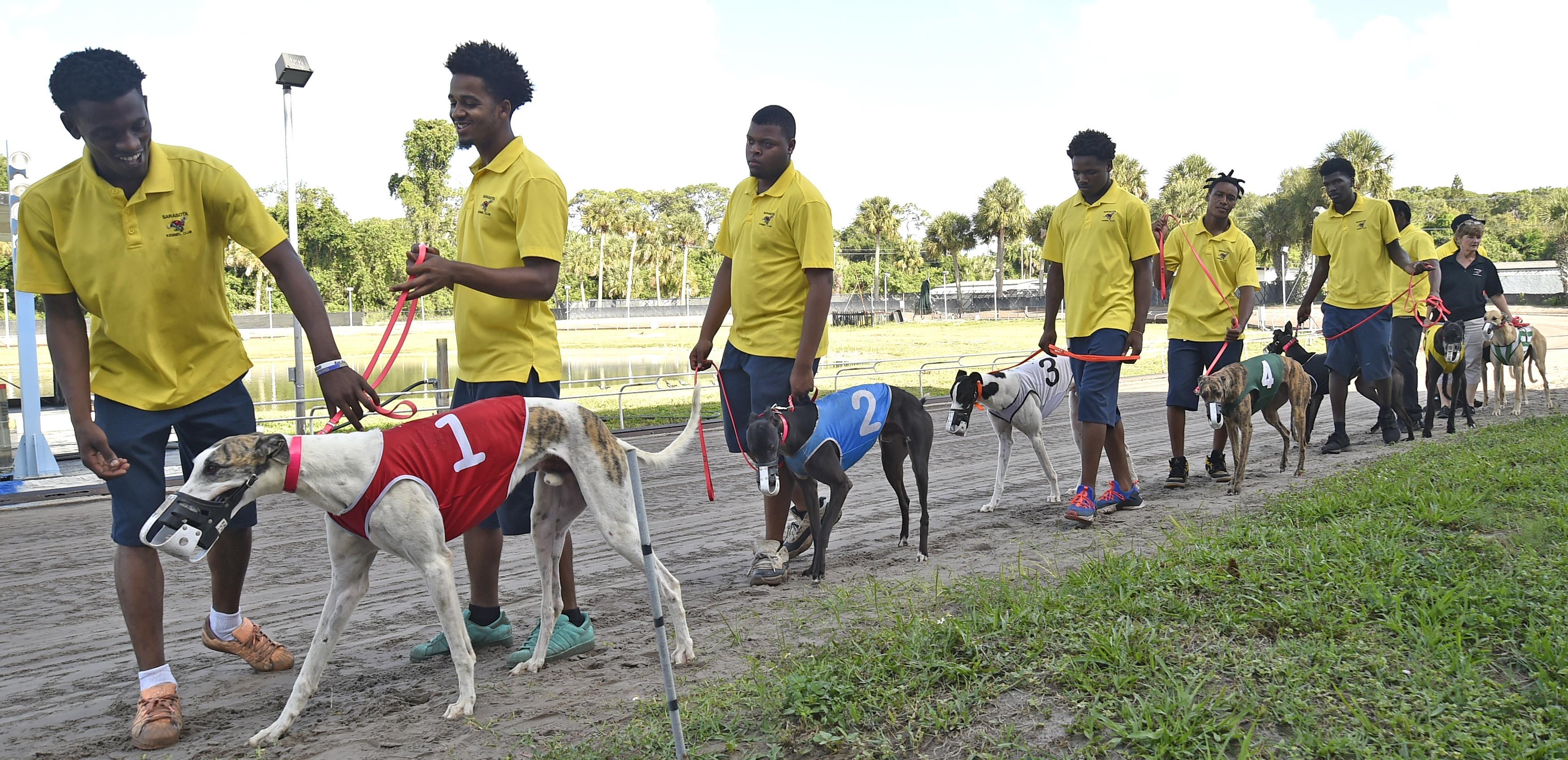 Greyhound Racing In America